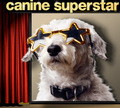 Canine Superstar